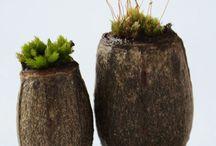 Nature Study | Moss