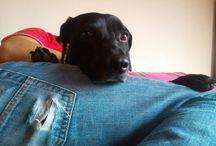 Tobías / Perrito adoptado y muy mimado