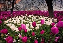 Fiori e piante - Flowers and Plants