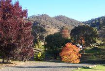 Autumn at Elm Cottage