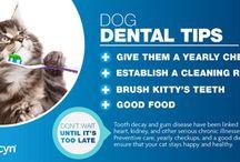 Animal Dental Care / Animal Dental Care