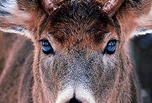Deer, et al