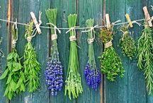 Fiitoalimurgia - flora spontanea ad uso alimentare / La Fitoalimurgia è quella scienza, afferente alla botanica applicata, che studia la flora spontanea ad uso alimentare.