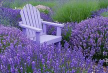 LAVENDER & HOW TO USE IT !!