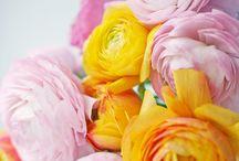 color / beautiful colour combinations / by Rita Jardon