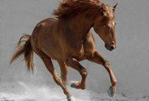Horses ♥