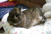 ウサギさん / かわいいうさぎさん
