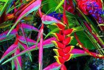 Plantes fleurs tropicales