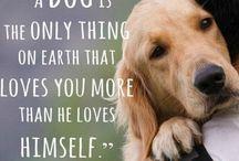 Just like animals / cães e outros que eu gosto