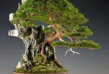 bonsai, ikebana