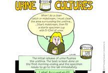 Nursing: Cultures