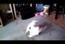 Cats Chasing Laser Pointers / What kitty doesn't need a little excitement and exercise? #Kittyo can provide both! It's a #catcam with a remote controlled laser built in. www.kittyo.com