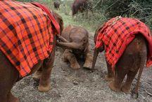 Elefantini di Nairobi / I cuccioli dell'orfanotrofio del DSWT