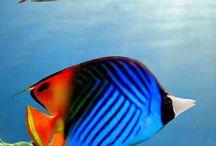Les poisson d'Emilie / Les poisson