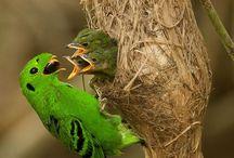 Pássaros / animais com penas