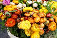 Flowers/Wedding