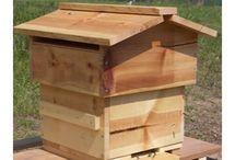 Pszczoły i ule