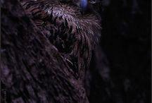 Совы Owls / Изображения сов: фото, рисунки, иллюстрации