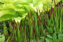 Rostliny - potřebuji :)