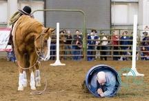 Cowboy race