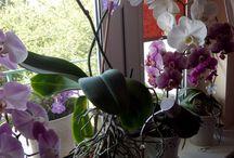 Rośliny domowe i doniczkowe / Pomysły na rośliny domowe i doniczkowe