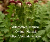 herbal sites / by Janette Long