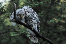 Animals!! / by Kathy Stirn