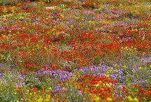 Цветы абстракции