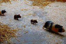 Gemma's animals!! / Cute