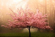 tree / by Wu Serena