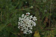 Las flores de Laforesta / Flores salvajes y cultivadas en Laforesta