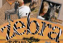 album zoo