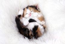 Gats / Imatges maques de gats