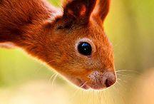 Animals Squirrel / Eekhoorn / by Frieda Hoppen