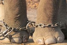 united against poaching nd animal cruelty