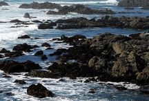 CA - Mendocino n Fort Bragg n Bodega Bay n Point Reyes NS