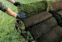 laying turf sod