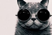 That's One Cool Cat / by Jenny Goldberg