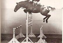 Horse History