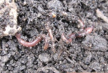 Blogs to Follow / Blogs that Nature's Footprint suggests following for posts on worm composting, container and small-space gardening, organics, sustainable living, and homesteading.