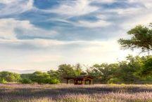 Lavender Celebrations / Annual celebration of the lavender bloom and harvest.