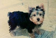 Tommy&Joey / O cachorro mais que especial! Meu lindinhoo