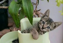 Animal cute