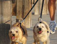 Meet Our Pets! / Staff Pet Photos