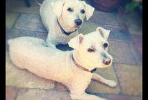 My doggies in heaven / Bengie en boomer
