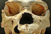 Scienze / Scienze: biologia, paleontologia, evoluzionismo e altro
