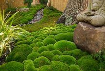 drömmig trädgård