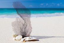 Sun, Sand and Shells