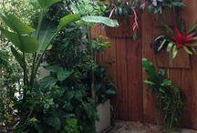Paisajismo y plantas que me gustan!