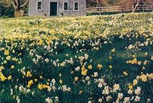 Meadows , Farms , Cottages